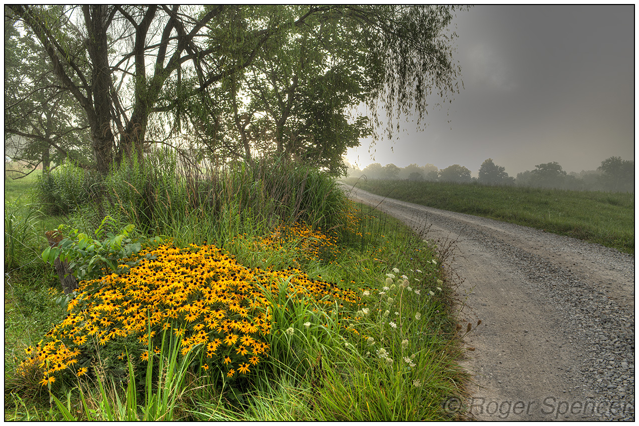 Black-eyed Susans and Country Road