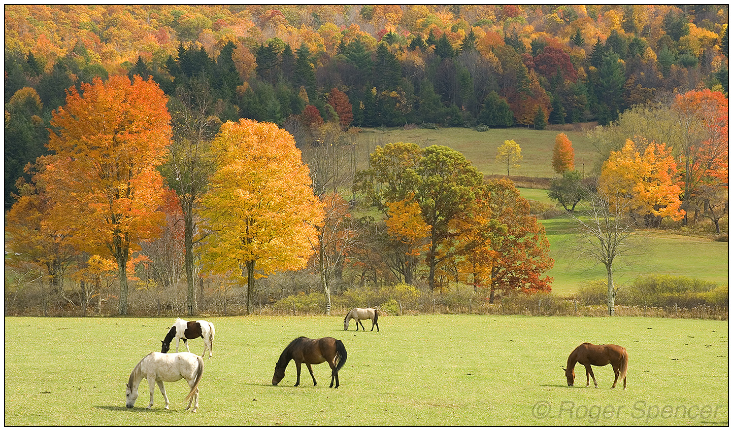Back Allegheny Mountain Horses